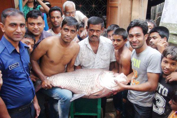 পদ্মায় ধরা পড়লো ২৯ কেজি ওজনের মাছ